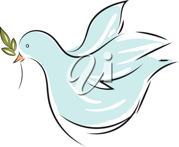 Vector illustration on white background of a light blue dove with an olive branch