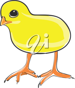 A cute chicken in bright yellow color with lengthy legs vector color drawing or illustration