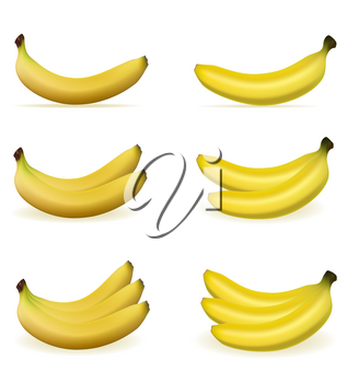 bananas realistic fresh and ripe stock vector illustration isolated on white background